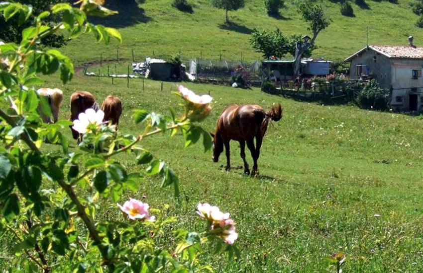 escursus-cavallo